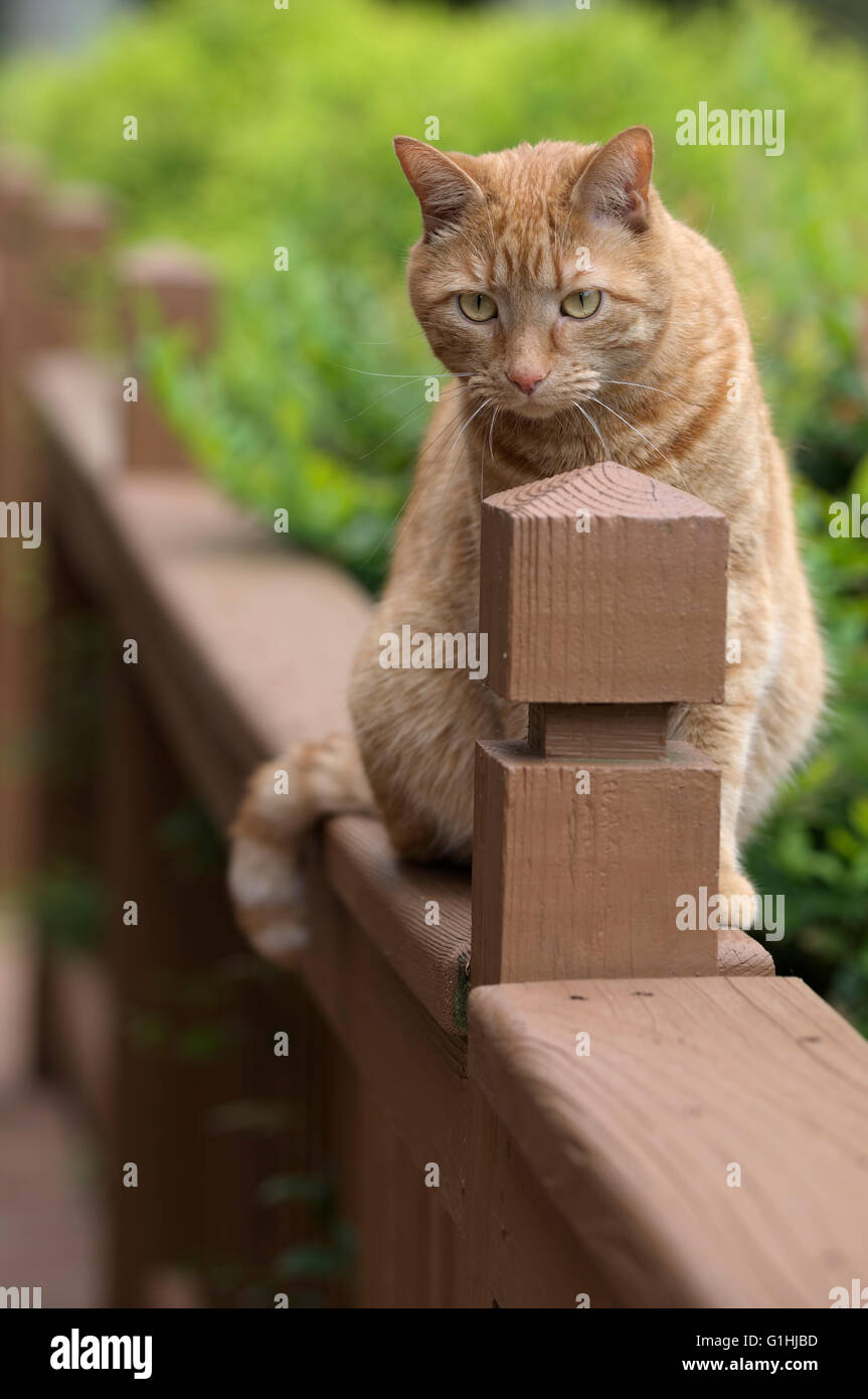 Cat on outdoor porch railing - Stock Image