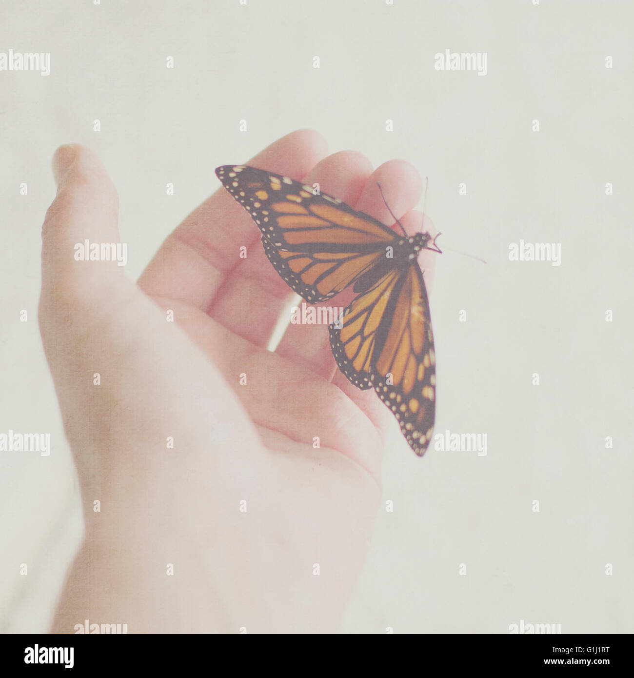 Monarch Butterfly on woman's hand Stock Photo