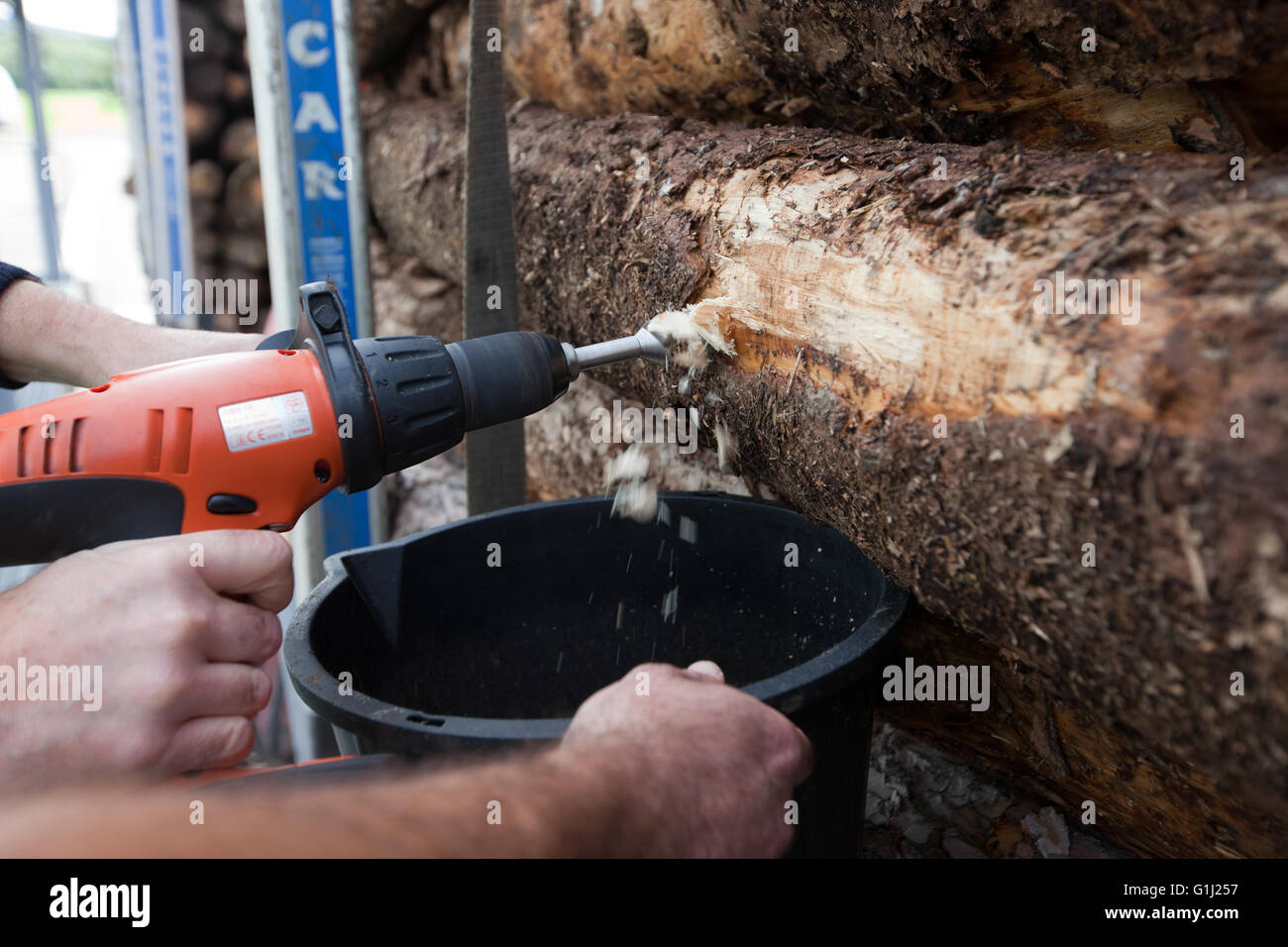 Western Wood Energy Plant at Port Talbot, Wales - taking samples of incoming timber to check hunidity levels. - Stock Image