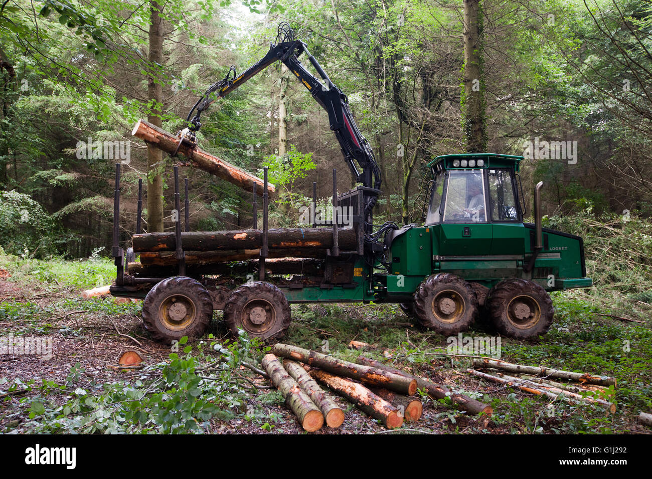 Forest of Dean, Gloucestershire. A forwarder collects cut logs of Forestry Commission douglas fir from an area being Stock Photo