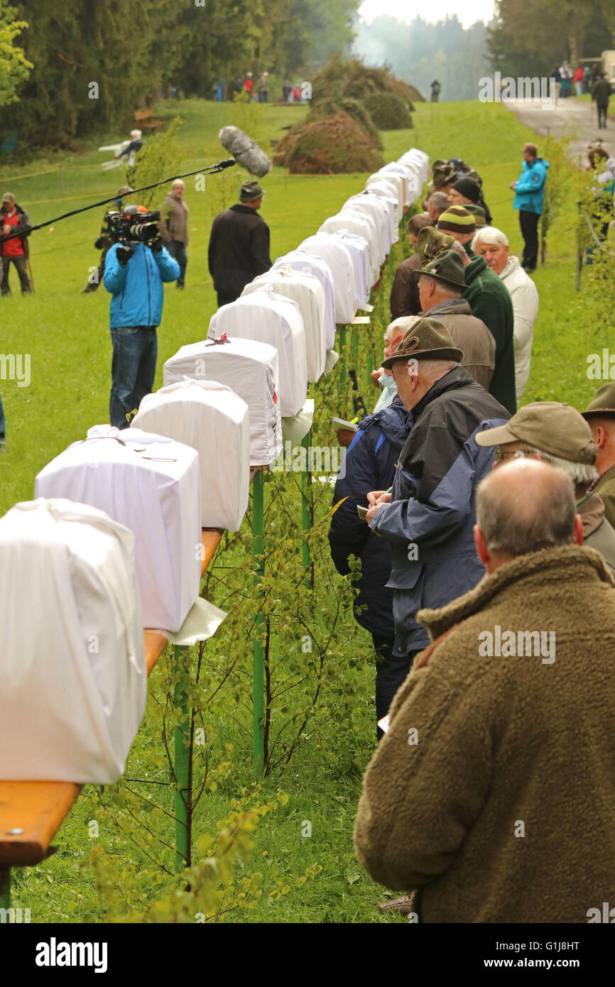 Benneckenstein, Germany. 16th May, 2016. Participants in the traditional Finch Manoeuvre stand in front of their - Stock Image