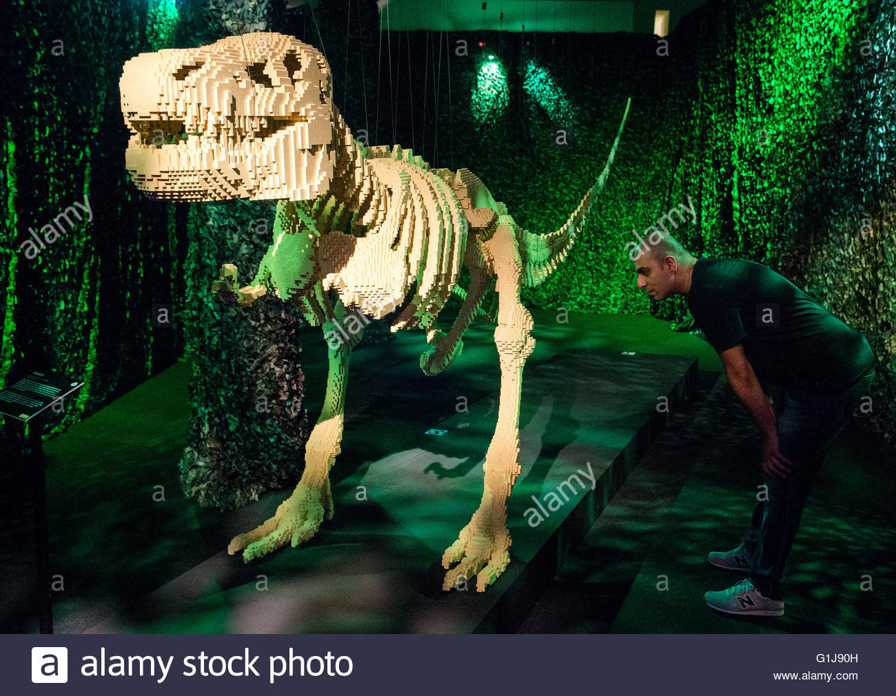 A man looks at the piece 'Dinosaur' made of Lego blocks, by the American artist Nathan Sawaya in the exhibition Stock Photo