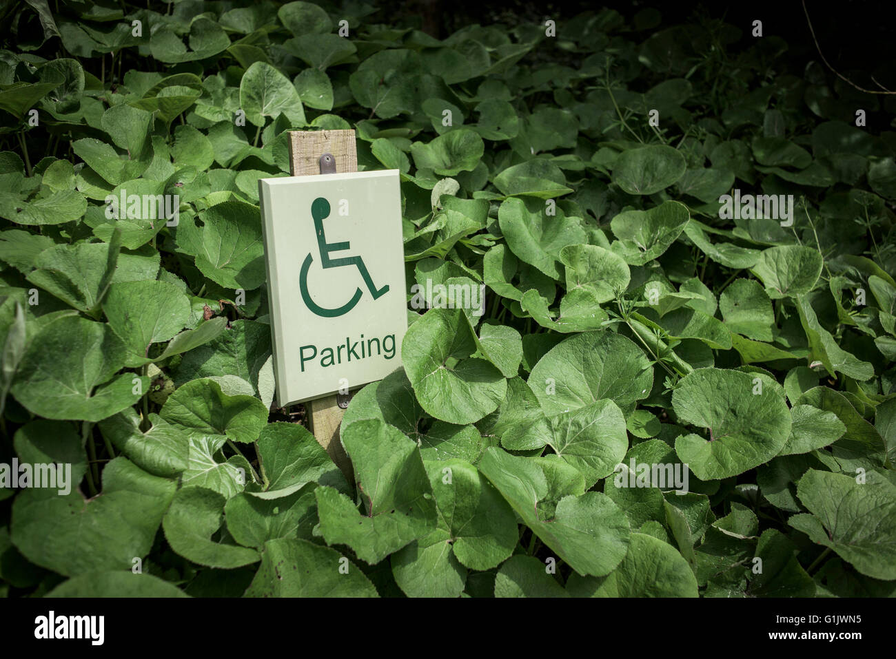 A sign for disabled parking. - Stock Image