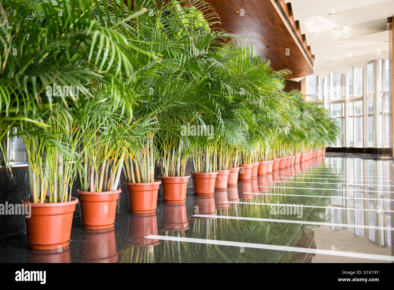 Great Long Row Of Green Tall Plants In Red Pots Inside A Building Lobby
