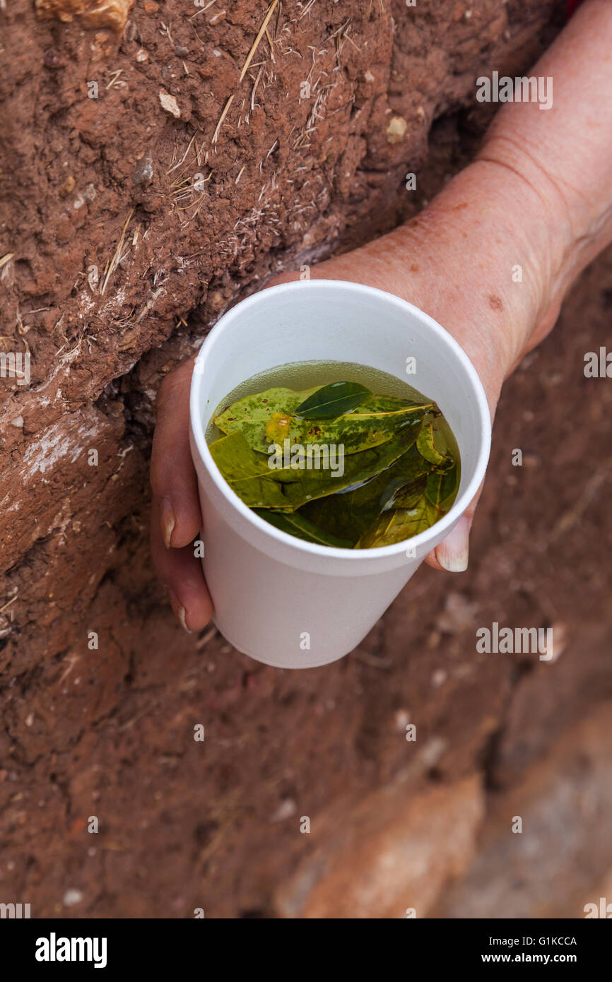 Cup of Coca Tea is a remedy to combat altitude sickness in Peru - Stock Image