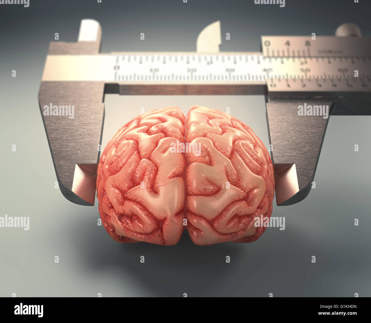 Caliper ruler measuring a human brain. Image concept of differences in IQs. - Stock Image