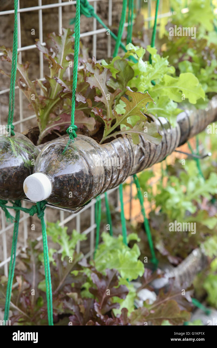 Planting A Small Vegetable Garden