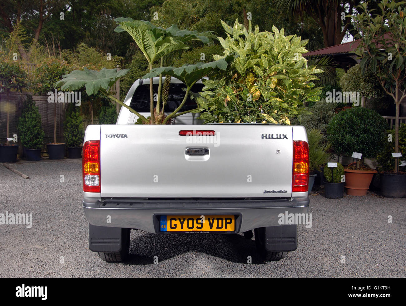 2009 Toyota Hilux pickup truck loaded with trees and plants - Stock Image