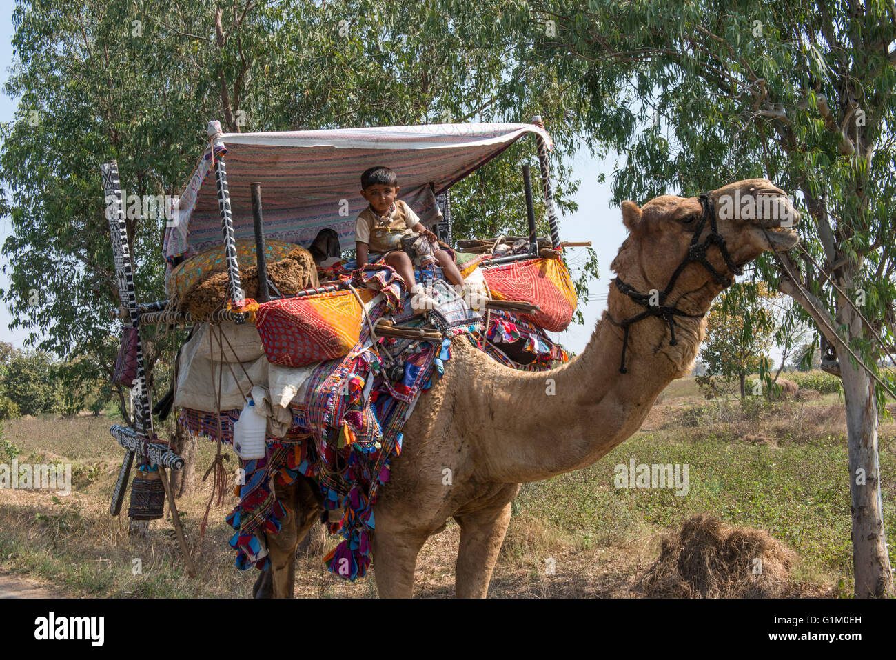 Rabari Nomads Travelling WIth Camel, Eastern Gujarat - Stock Image