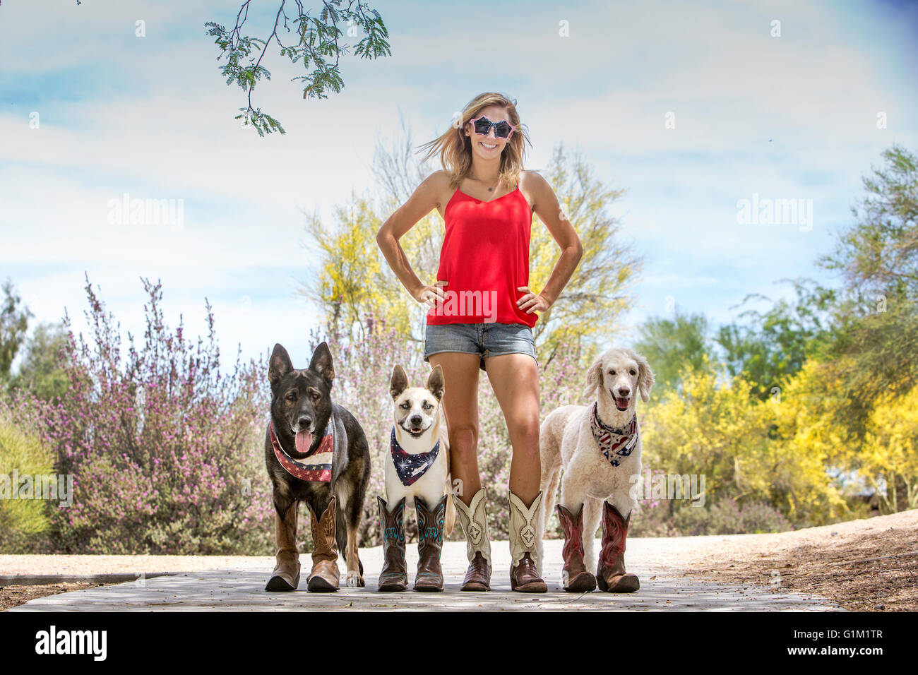 Woman with 3 dogs wearing cowboy boots and Patriotic Bandanas - Stock Image
