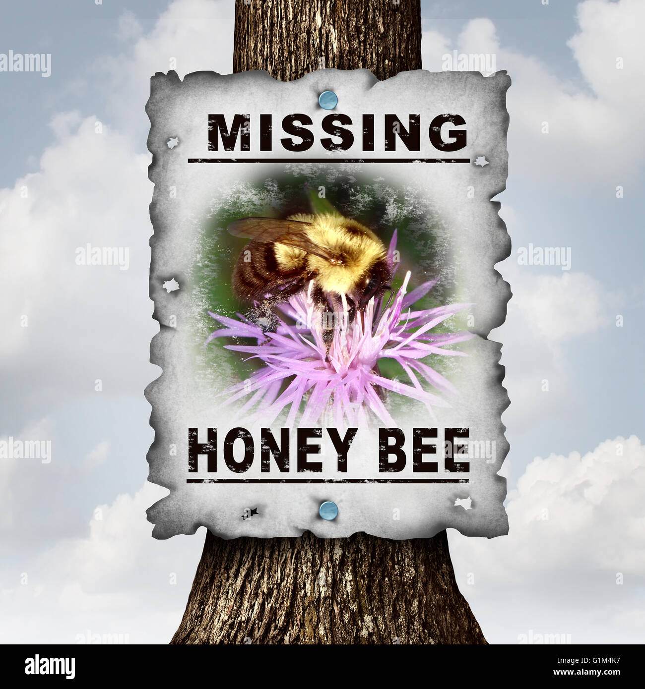 Honey bee missing concept or disappearing bees message sign as an agriculture symbol for farming pollination crisis - Stock Image