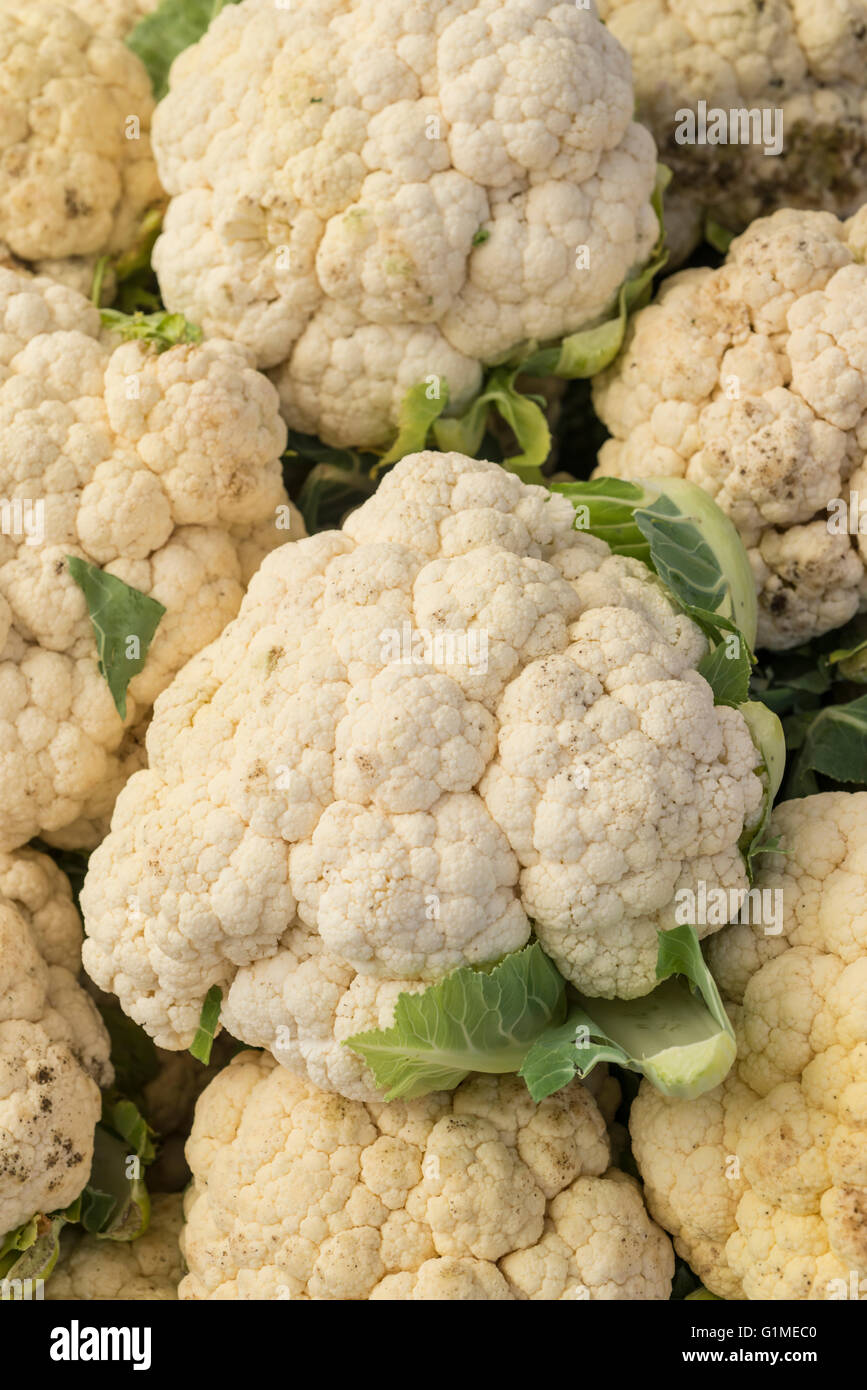 Fresh cauliflower in market - Stock Image