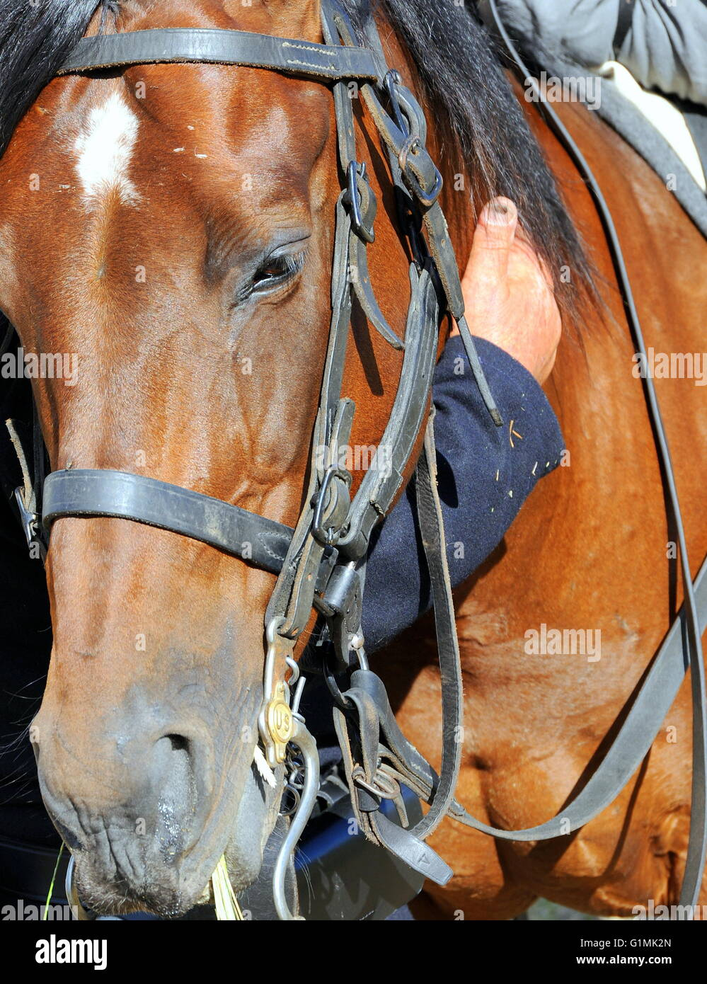 Male bonding with horse. - Stock Image