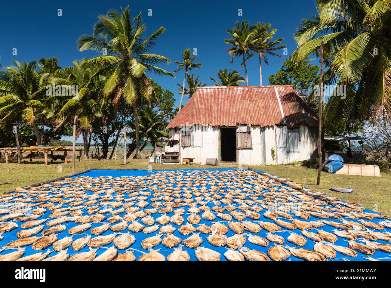A local business venture in remote Namuka-i-lau, fish drying in the sun before being exported to Hong Kong. Lau - Stock Image