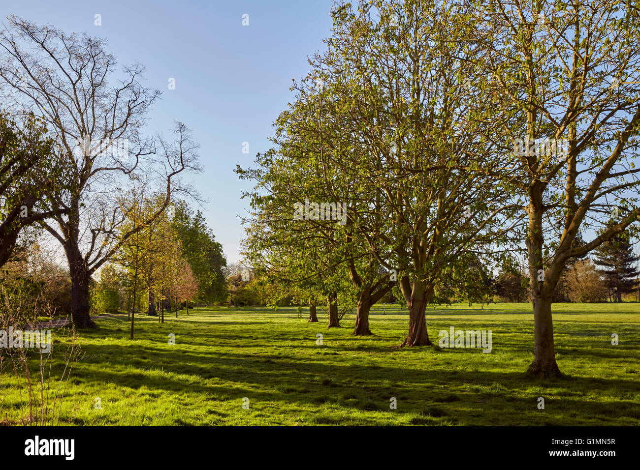 Hurst Meadows, West Molesey, Surrey, England. - Stock Image