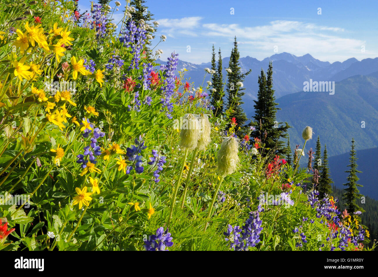 Wildflowers, Idaho Peak, Selkirk Mountains, British Columbia, Canada - Stock Image