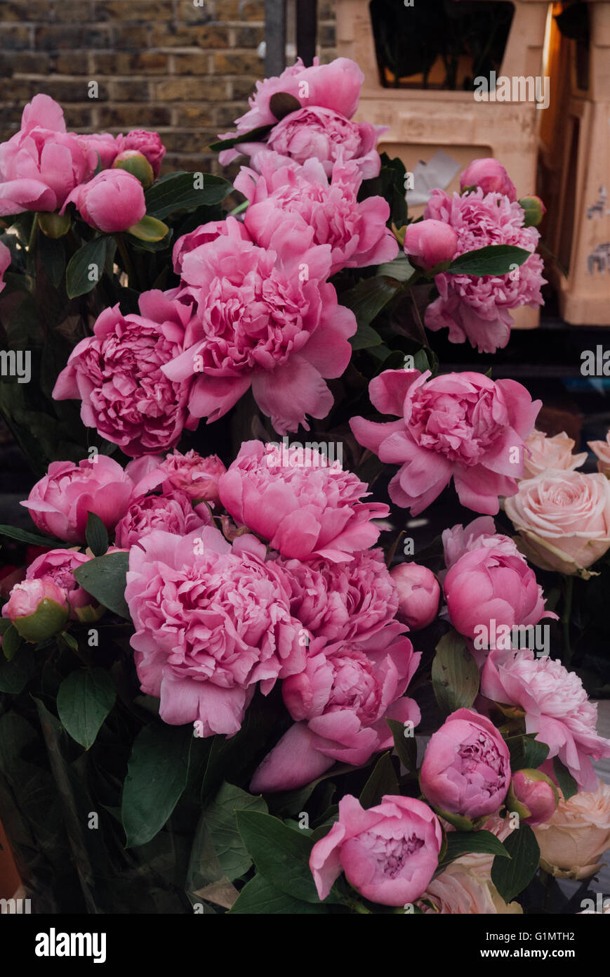 Pink peonies at a stall in Columbia Road Flower market in London - Stock Image