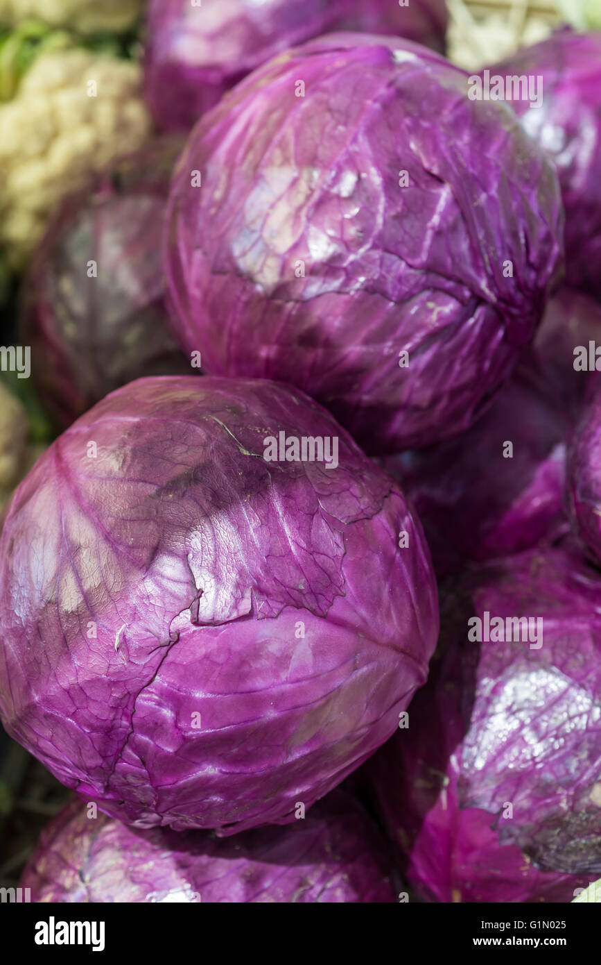 Purple cabbage in market - Stock Image