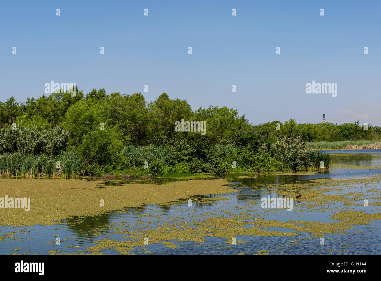 Costanera Sur Ecological Reserve, Buenos Aires, Argentina - Stock Image