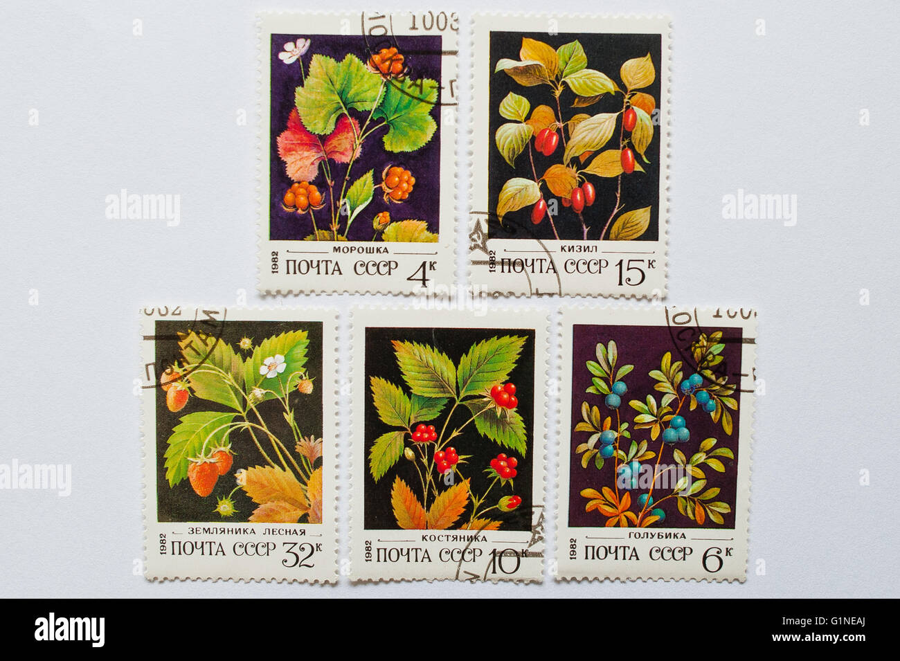 UZHGOROD, UKRAINE - CIRCA MAY, 2016: Collection of postage stamps printed in USSR, shows forest berries series, Stock Photo