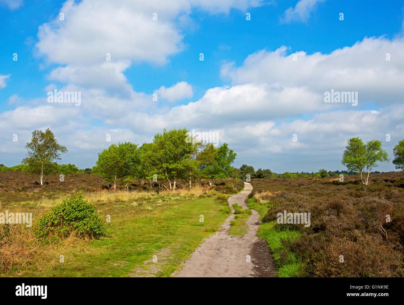 Dunwich Heath, Suffolk, England UK - Stock Image