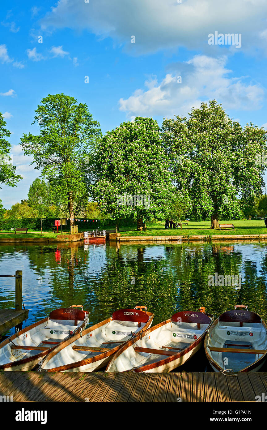 Rowing boats moored on the river Avon in the heart of Stratford upon Avon, Warwickshire on a summer afternoon. - Stock Image