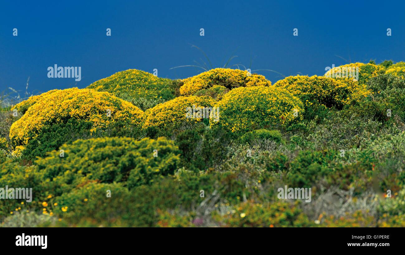 Portugal, Alentejo: Coastal vegetation inside of Nature Park Costa Vicentina and Southwest Alentejo - Stock Image