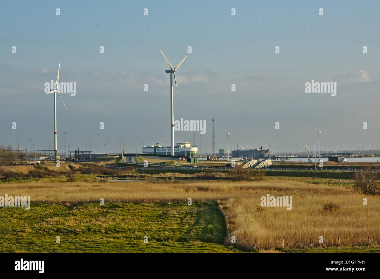 Nature and industry. polder wetlands with ships and windmills of Port of zeebrugge behind - Stock Image