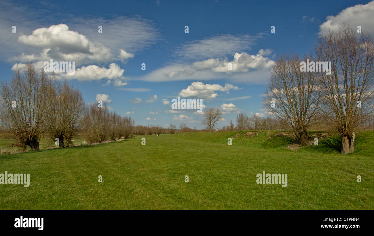 Flemish landscape with meadow and knotted willows - Stock Image