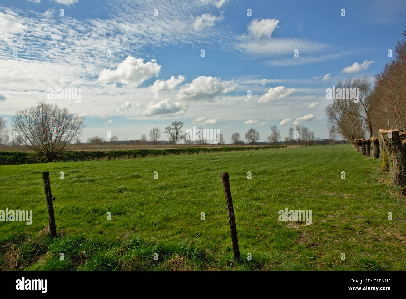Typical flemish landscape with meadow and knotted willows - Stock Image