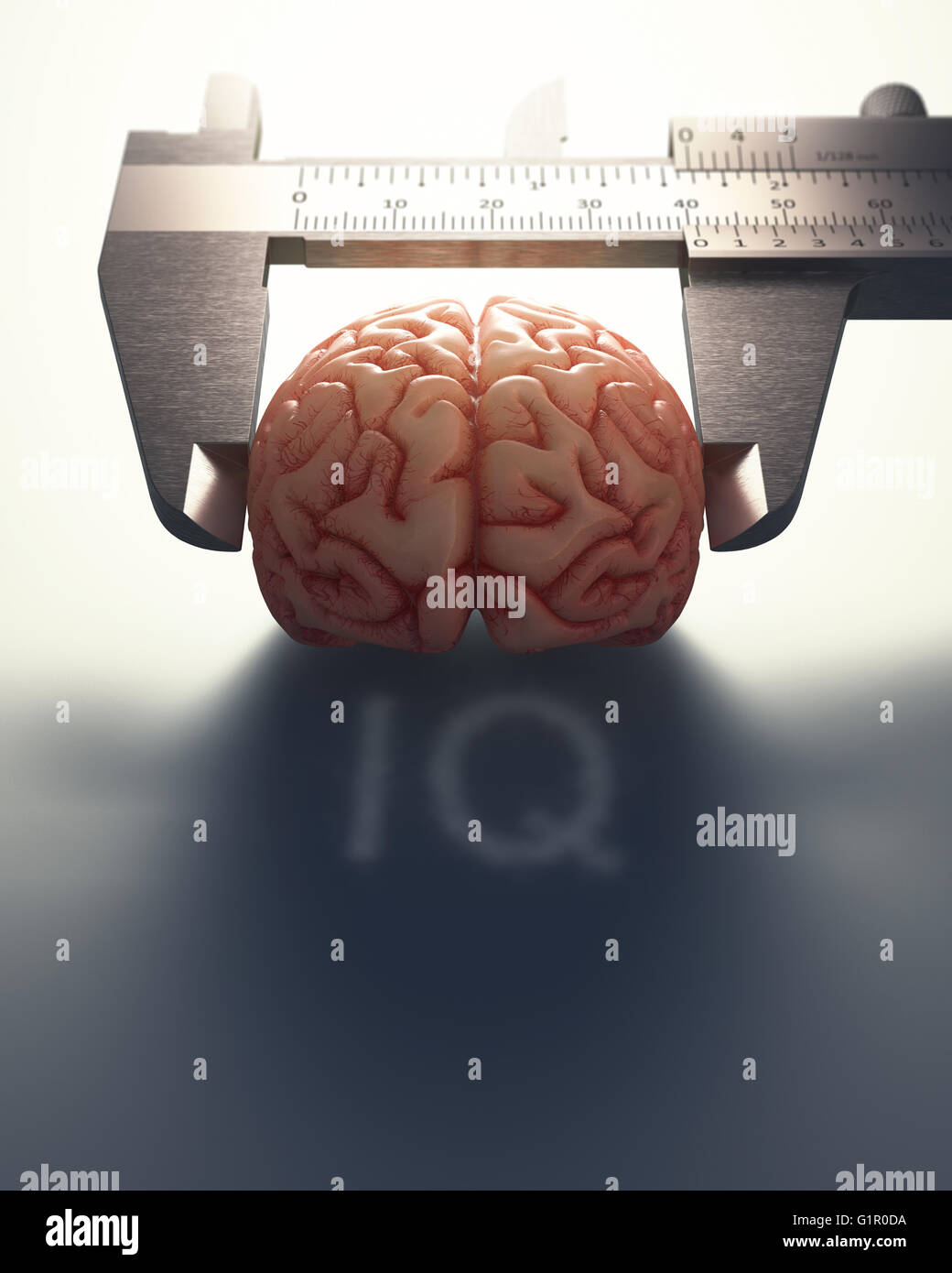 3D image concept of a caliper ruler measuring a human brain. It is a concept of the differences of the human mind. - Stock Image