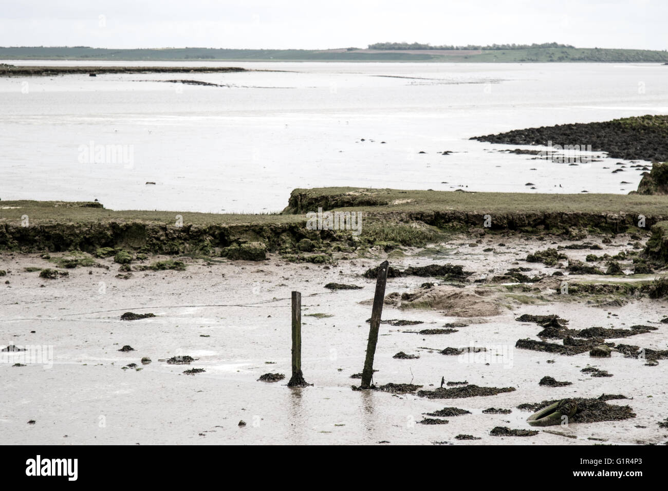 Wooden posts sticking out of mud at low tide, River Swale, north Kent - Stock Image