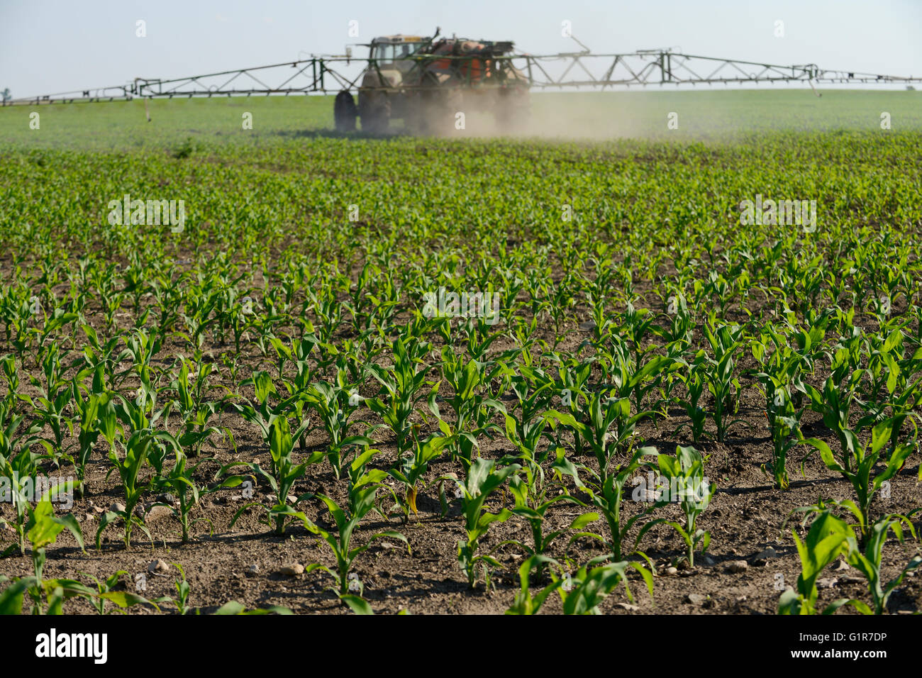 ROMANIA Banat, village Semlac, 2000 hectare farm of german farmer, pesticide and herbicides application in maize - Stock Image