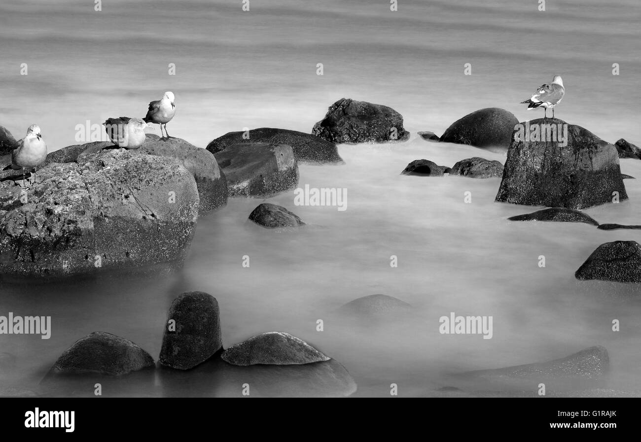 Birds on rocks  - birds standing on the rocks in the ocean in black and white Stock Photo