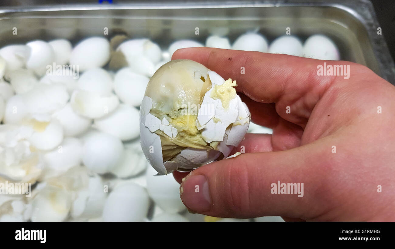rotten egg on a chefs hand in front of more eggs stock