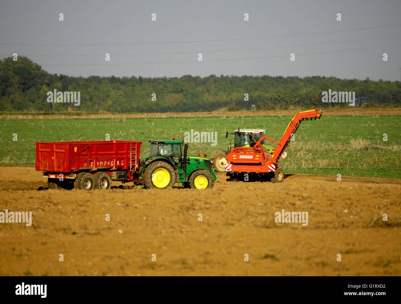 AJAXNETPHOTO. PICARDY, FRANCE. - AGRICULTURE - HARVESTING POTATOES ON THE SOMME.  PHOTO:JONATHAN EASTLAND/AJAX  Stock Photo