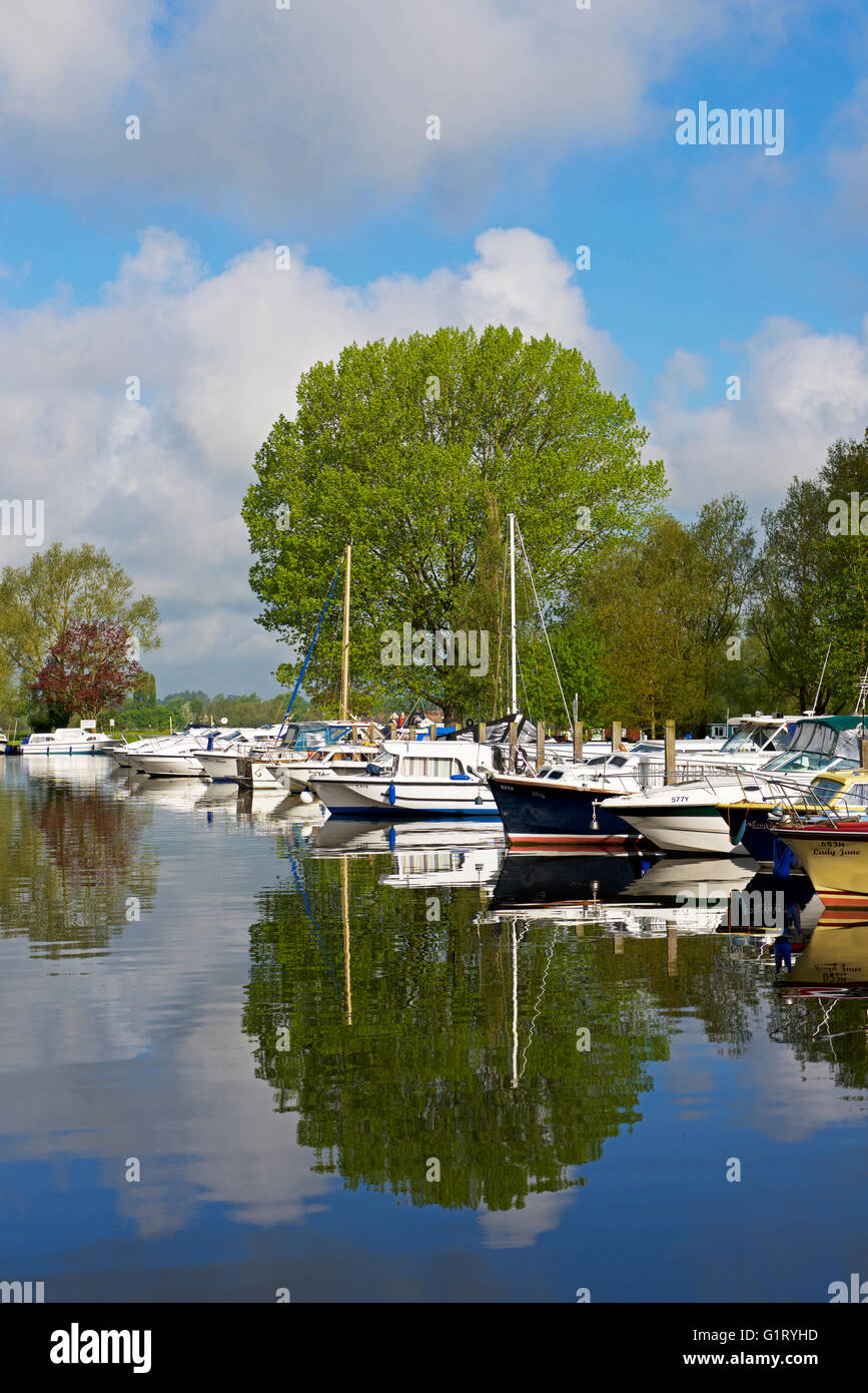 Boats moored on the River Waveney at Beccles, Suffolk, England UK - Stock Image