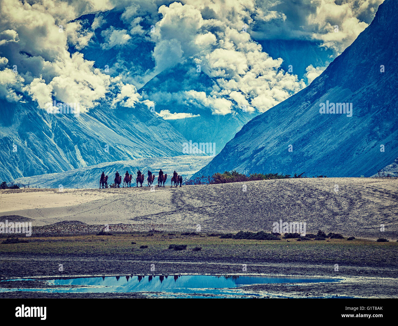 Tourists riding camels in Nubra valley in Himalayas, Ladakh - Stock Image