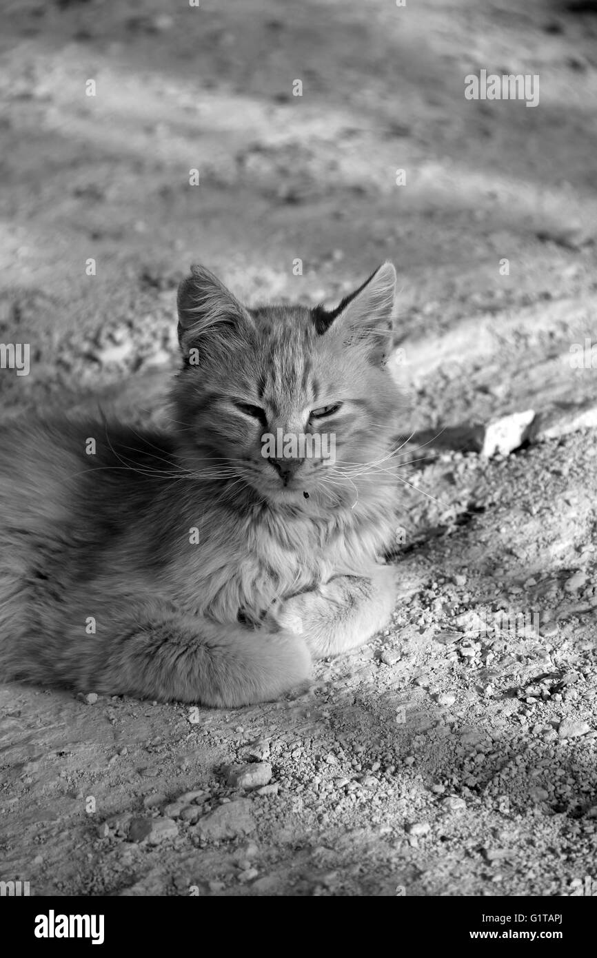 A cat lazing in the sunset light letting the world go buy in Cyprus - Stock Image