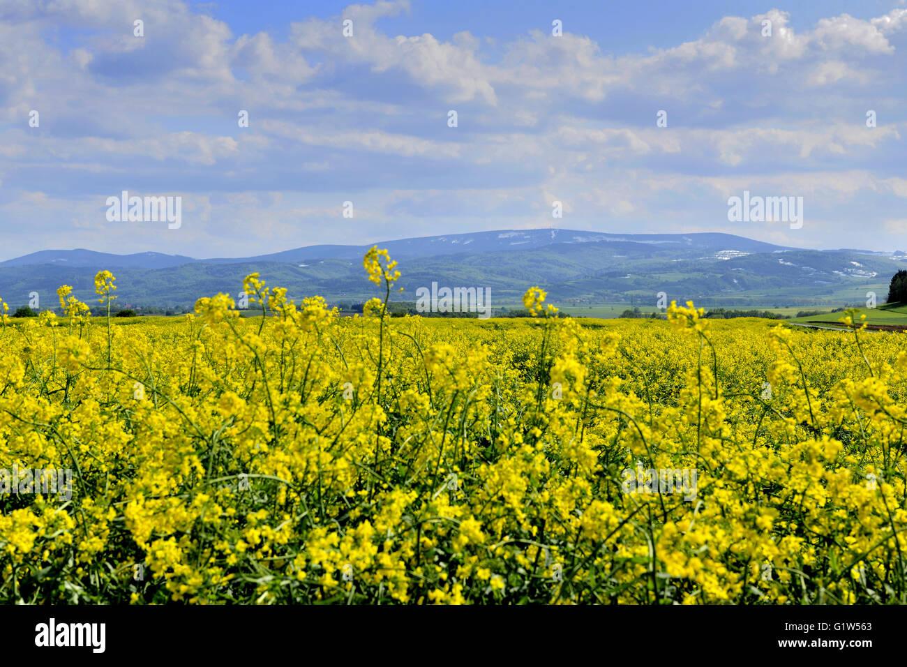 dolnoslaskie, mountain,1015 m above sea level, wlk.sowa, sudety, landscape, spring, weather, silesia, poland, travel, - Stock Image