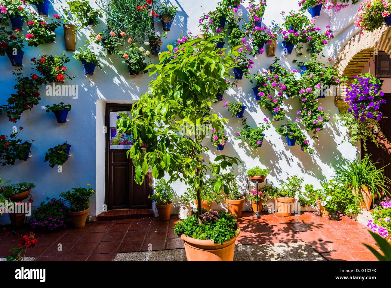 Courtyards Festival of Cordoba 2016 - La Fiesta de los Patios de Córdoba. - Stock Image
