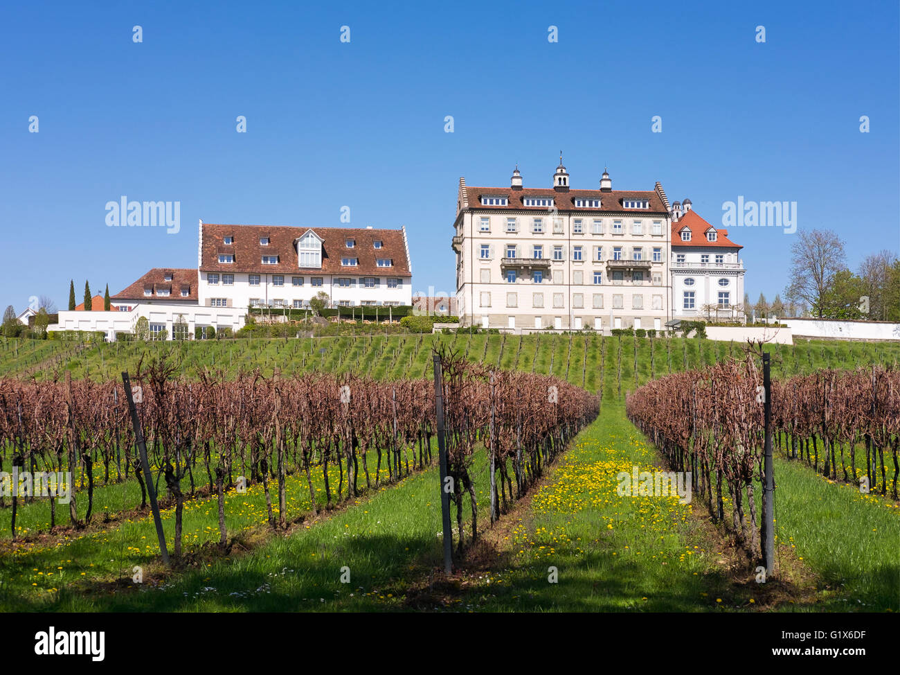 Schloss Kirchberg castle above vineyards, Immenstaad at Lake Constance, Lake Constance district, Swabia, Baden-Württemberg - Stock Image