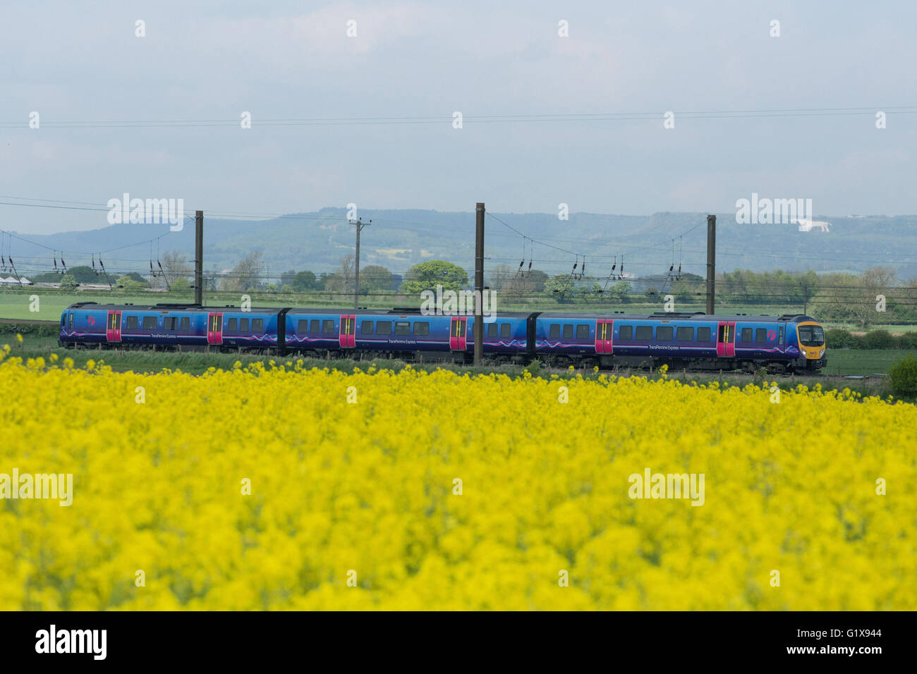Raskelf, North Yorkshire. 17 May 2016. A TransPennine train travels south through fields nearby Raskelf, North Yorkshire. - Stock Image