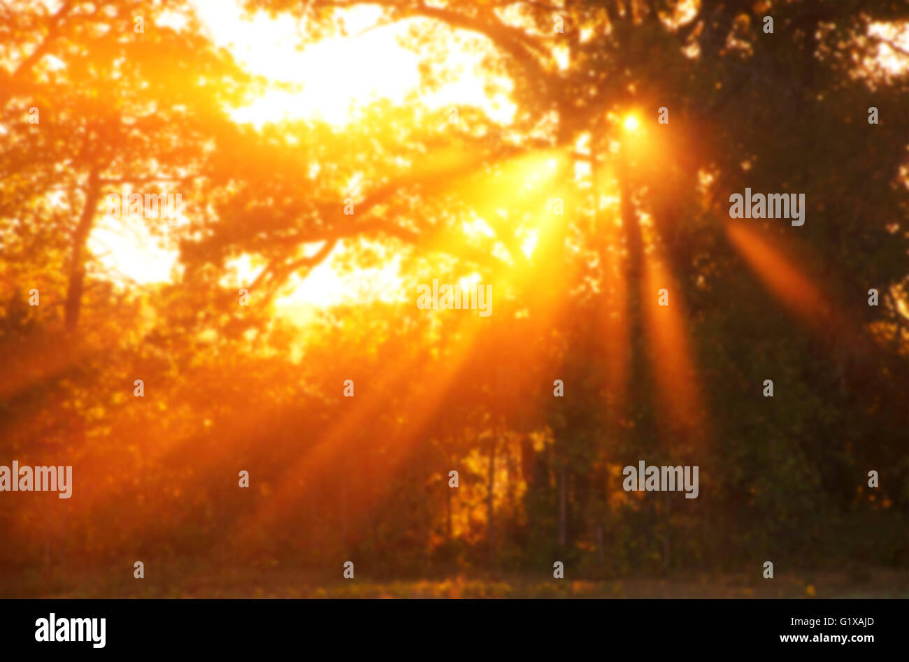 Blurred Background Image Of A Dramatic Sunrise In Deep Orange Color With  Rays Through Trees In Morning Mist