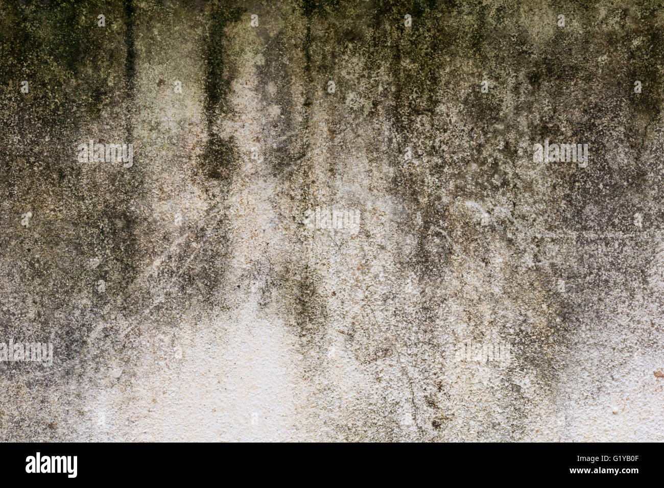 Mouldy Walls Stock Photos Amp Mouldy Walls Stock Images Alamy
