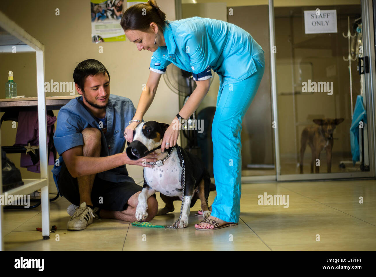 Doctors of a veterinary clinic with their patient in Windhoek, Namibia (Photo by Oleksandr Rupeta) - Stock Image