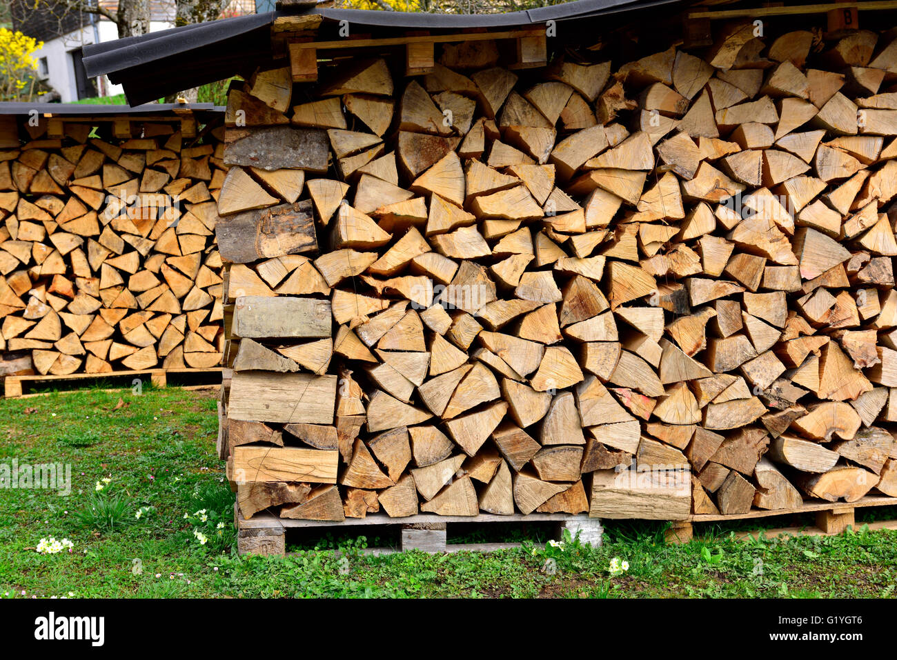 Stack of logs for firewood seasoning under tin roof - Stock Image
