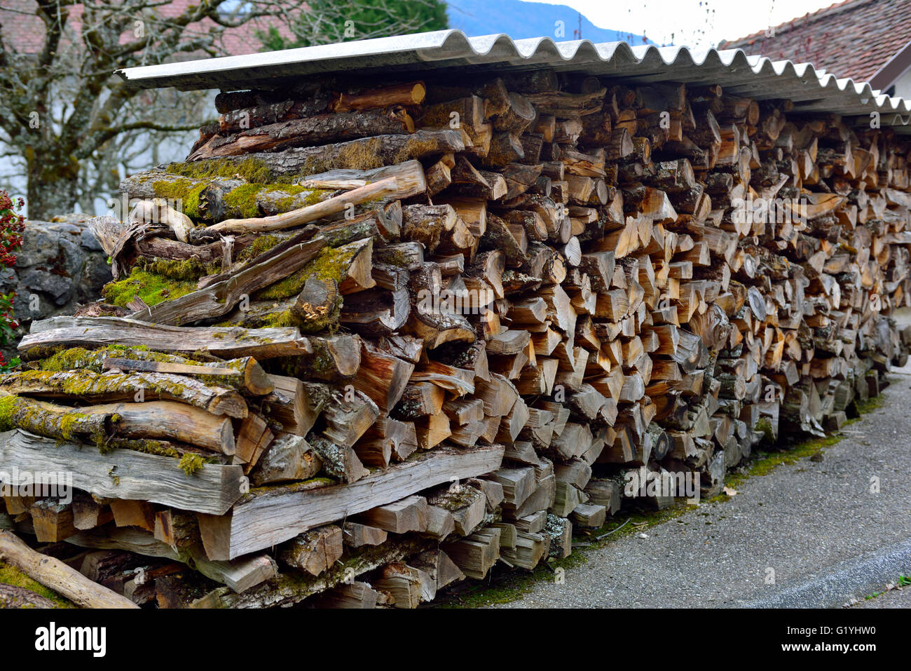 Stack of logs for firewood seasoning under tin sheets - Stock Image