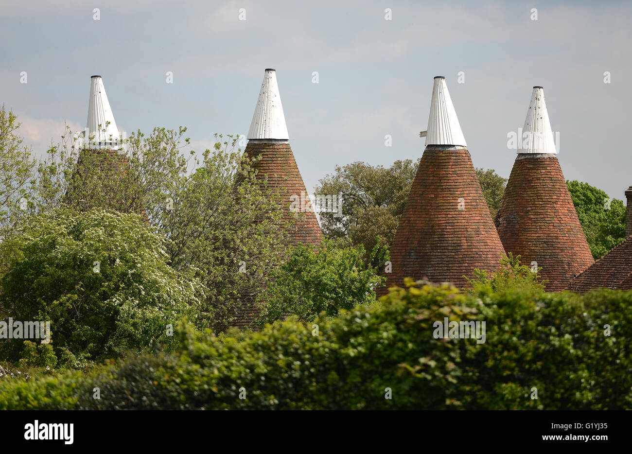 Oast house roofs, East Sussex - Stock Image