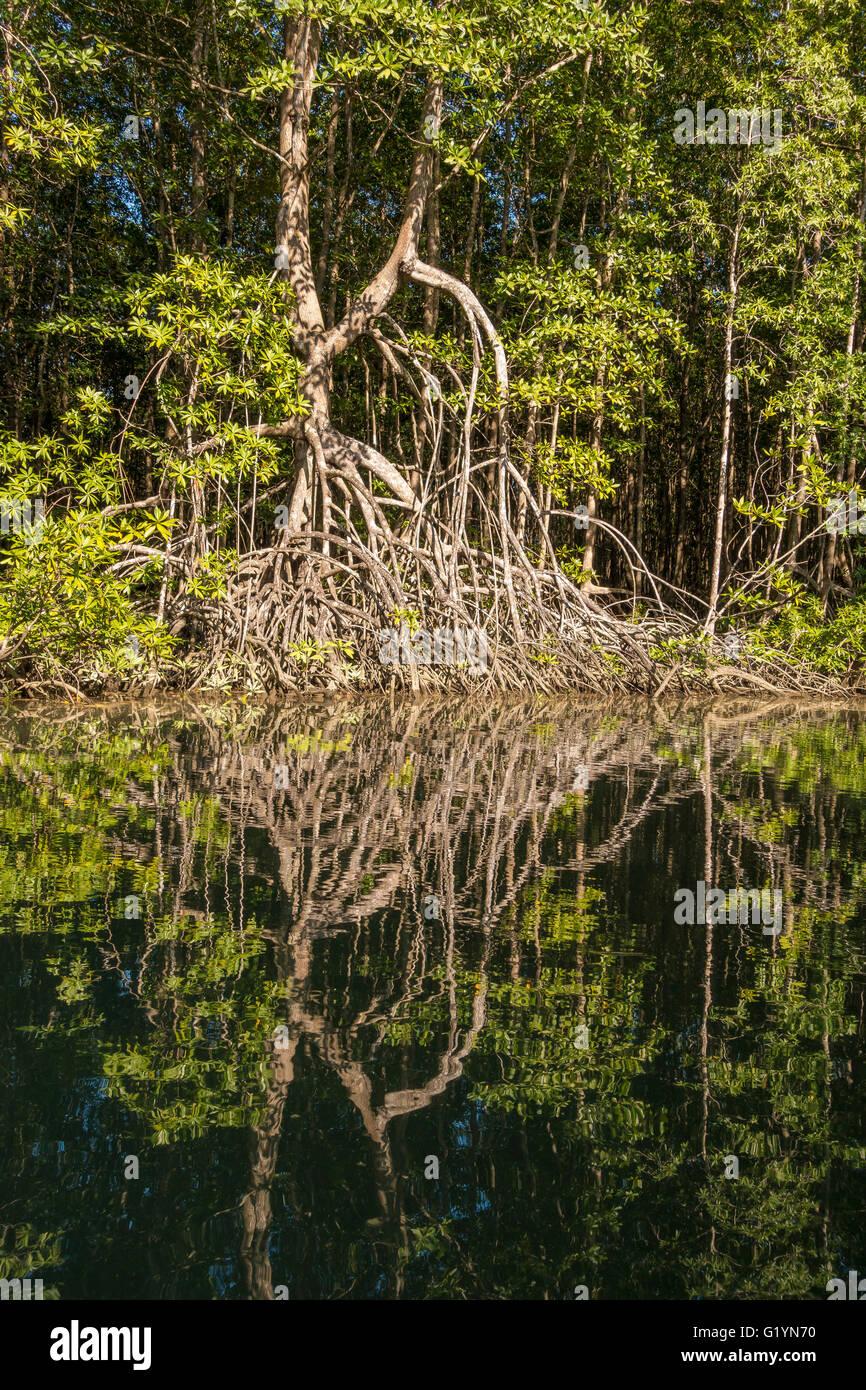 OSA PENINSULA, COSTA RICA - River and mangrove swamp. - Stock Image